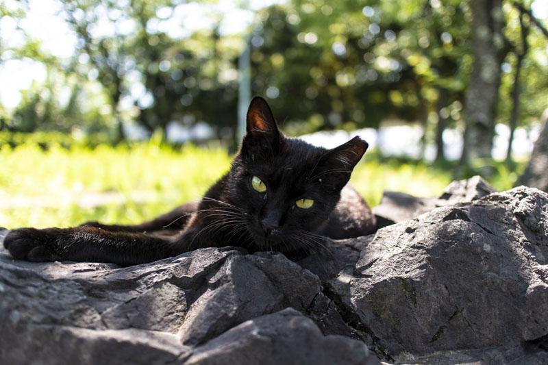 荒子川公園にいた人懐っこい黒猫