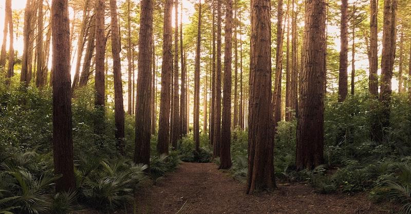 森林インストラクター