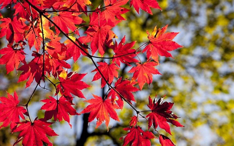 秋キャンプにおすすめの寒さ対策グッズ8選。昼夜の気温差が激しい季節に役立つ!